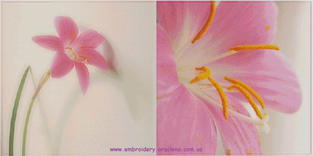 Лилейник 90 цветов