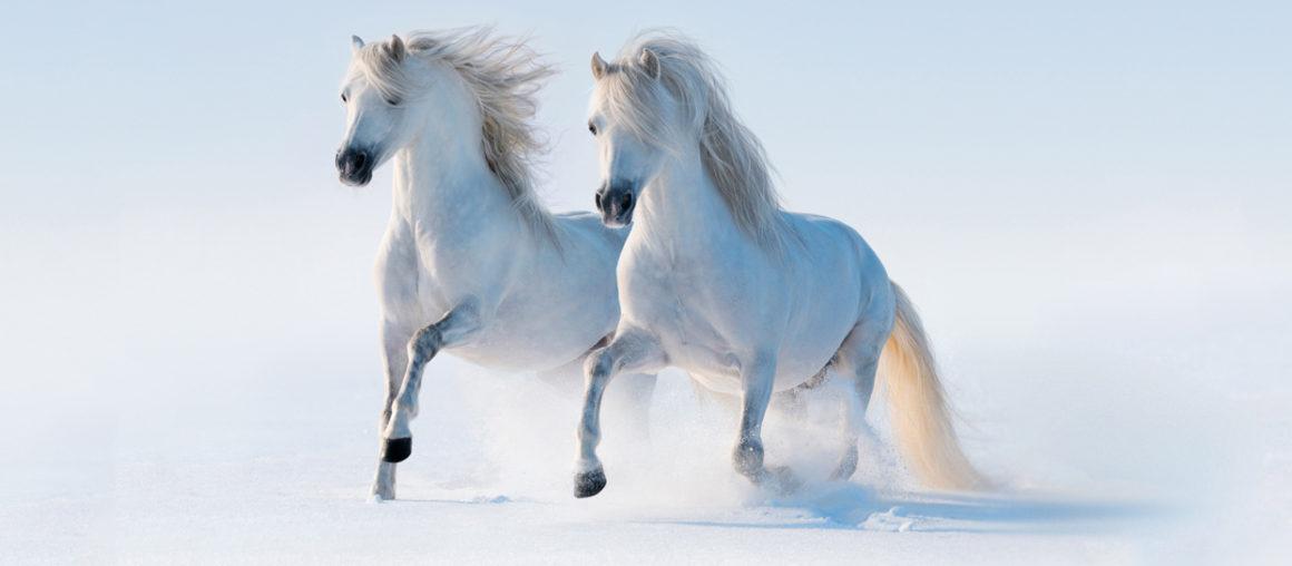 Год синей лошади ;)